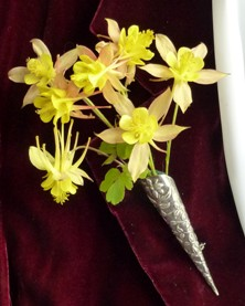 Aquilegia: Small blushed yellow double