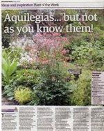 Aquilegia flower: Touchwood feature in 'Garden News' magazine, May 2012